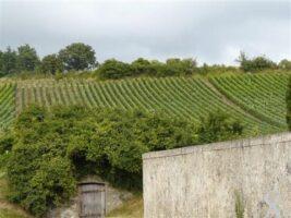 Situé dans la zone d'appellation Champagne de l'Aisne.  - Contributeur : Sébastien Sartori