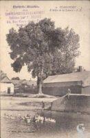 L'arbre de la liberté   - Contributeur : T.Martin