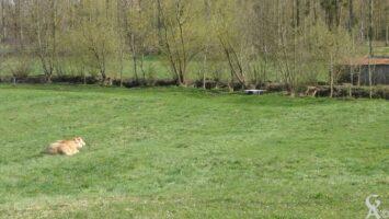 Les bords de l'Oise - Contributeur : Natty