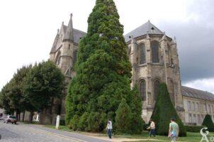 Abbaye Sait-Léger - Contributeur : M.Trannois