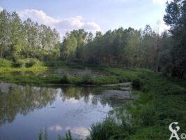 Etang de l'Aqueduc à Manicamp - Contributeur : S Sartori