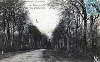 Forêt - Contributeur : A. Demolder