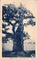 Le chêne brûlé - Contributeur : R.Hourdry