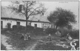 Plumage de l'osier - Contributeur : J.M. Gérard
