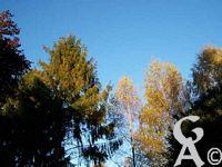 La maison Pommery - Vue d'automne